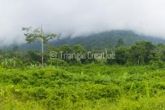 GuineaEcuatorialBasiléTravel-49
