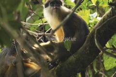 GuineaEcuatorialBasiléTravel-61