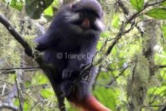 GuineaEcuatorialBasiléTravel-62